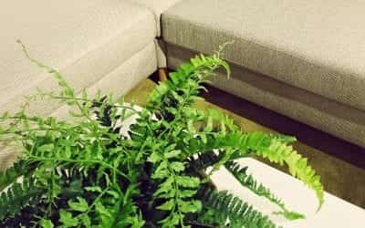 5 Practical Tips On How To Improve Indoor Air Quality At Home